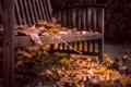 Картинка листья, осень, скамья