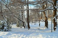 Картинка Зима, Деревья, Снег, Лучи, Парк, Winter, Park, Snow, Trees