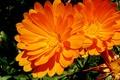 Картинка природа, цветок, макро