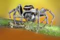 Картинка паук, фон, макро