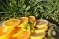 Картинка meduzanol ©, трава, апельсины, весна 2018, лимон, апрель, цветы