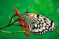 Картинка природа, насекомое, растение, цветок, бабочка